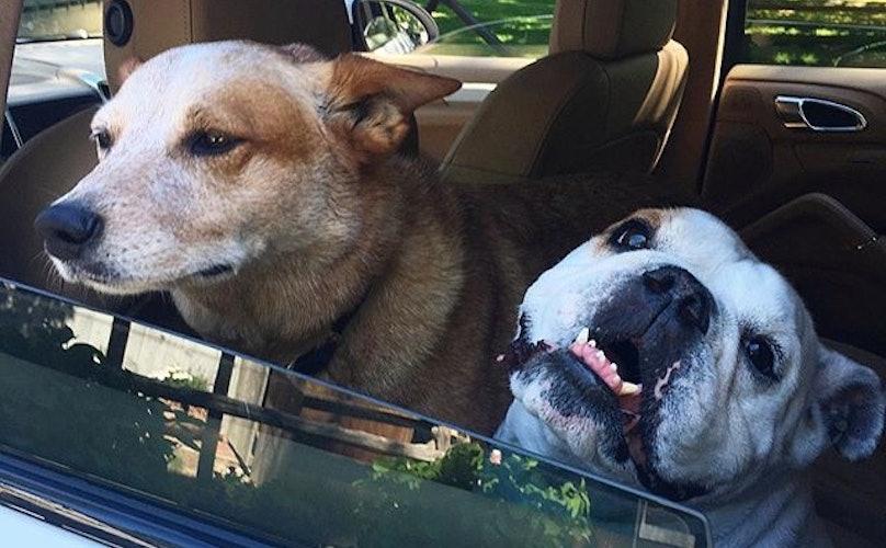 Hoge straffen voor achterlaten hond in hete auto