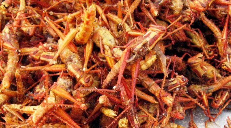 De meest gestelde vragen over insecten eten