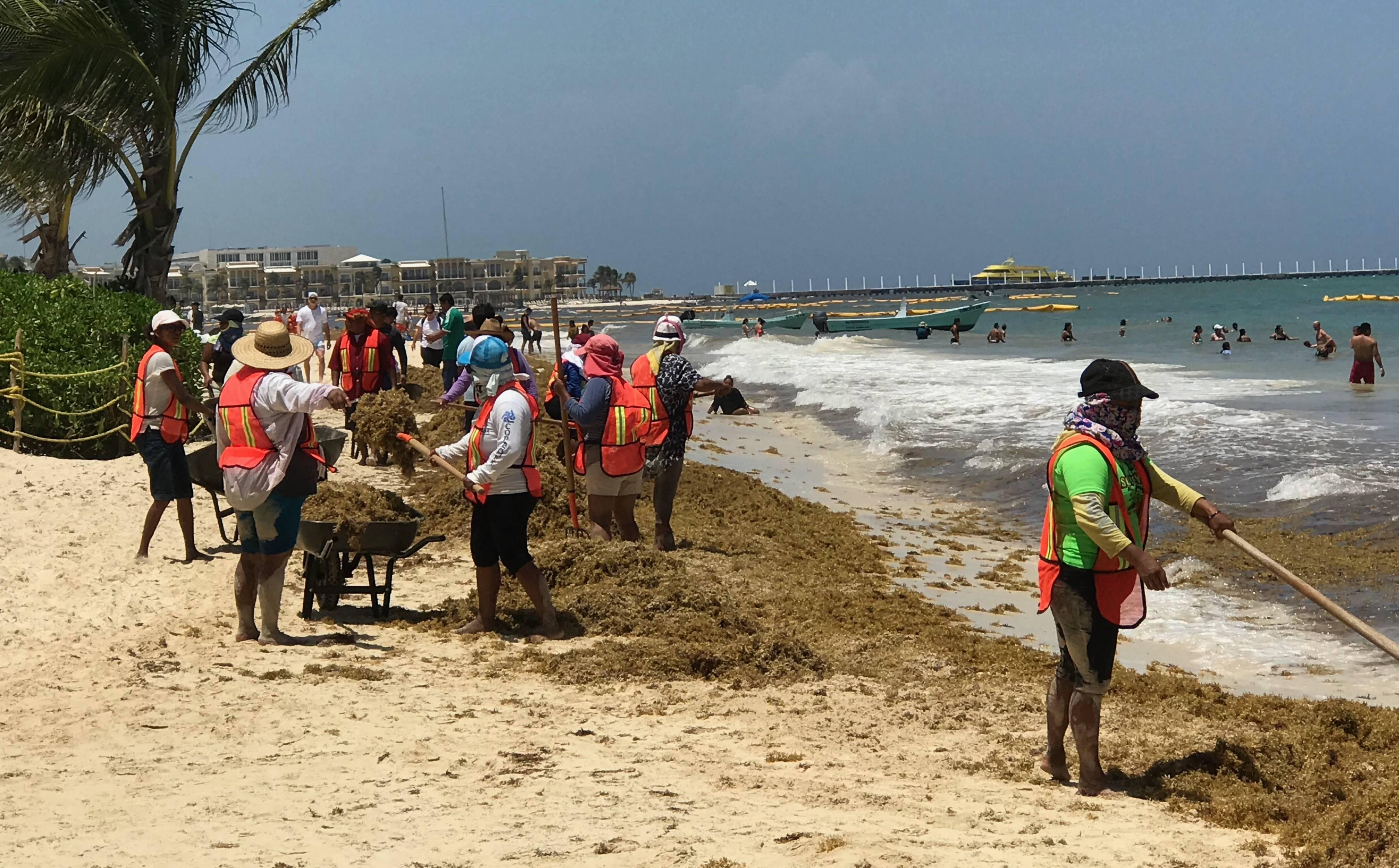 """Stranden in Mexico vol met stinkend zeewier: """"vrijwilligers mogen opruimen"""""""