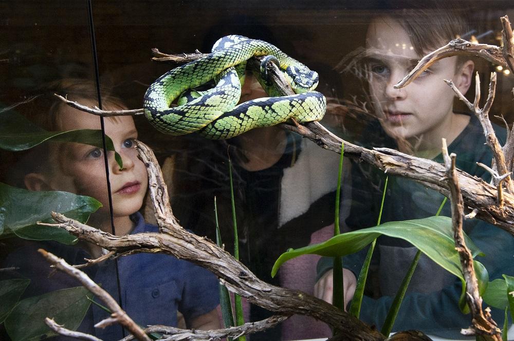 Bijzondere slangen in Friesland